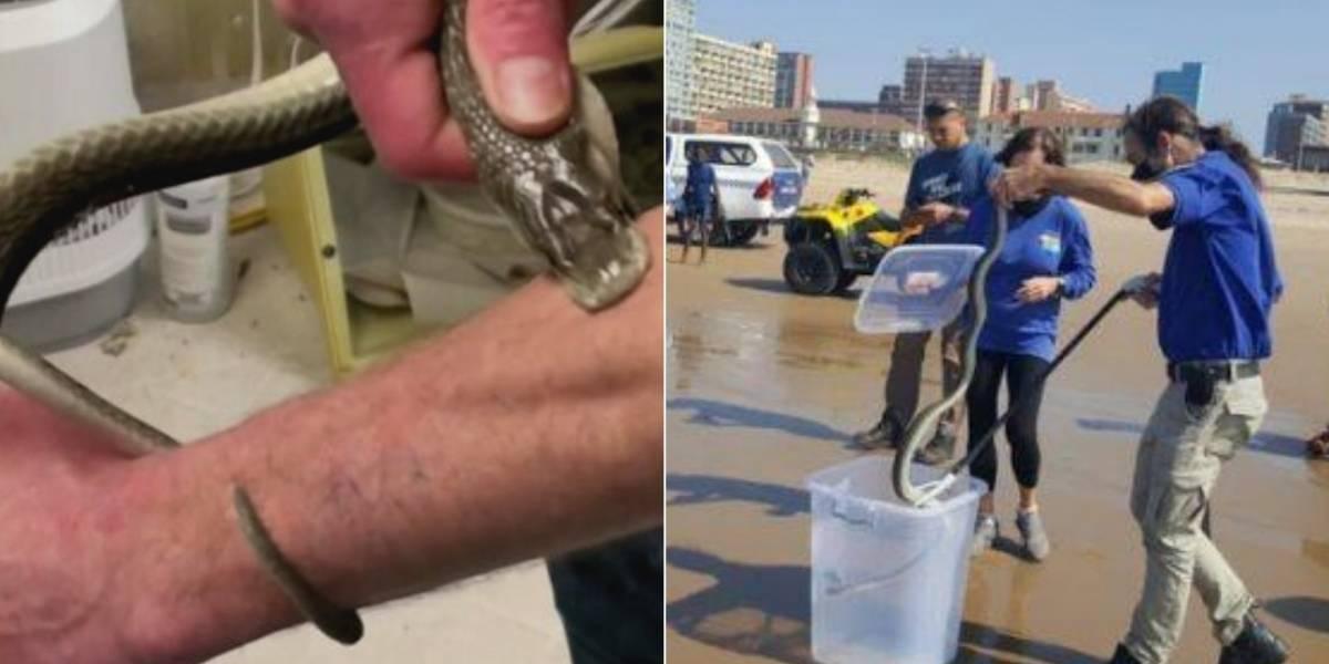 Vídeo de cobra extremamente venenosa encontrada nadando em praia se torna viral