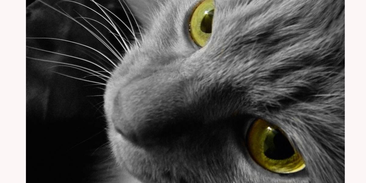5 curiosidades sobre a visão dos gatos