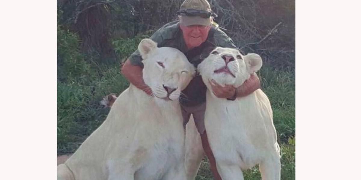 Leoas brancas matam homem em brincadeira violenta