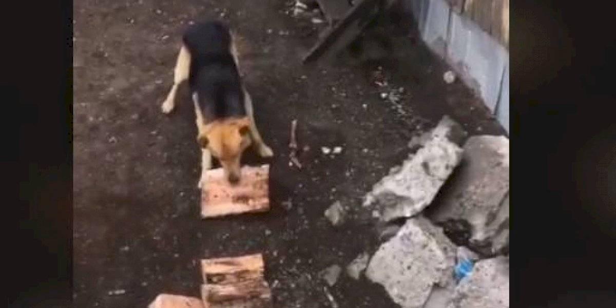 Perro ayuda a abuela a acarrear la leña en Coyhaique y se gana los aplausos de las redes sociales