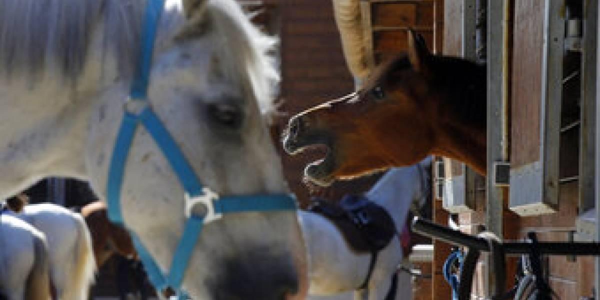 Mutilan a los caballos: sospechan de una secta francesa por crueles rituales