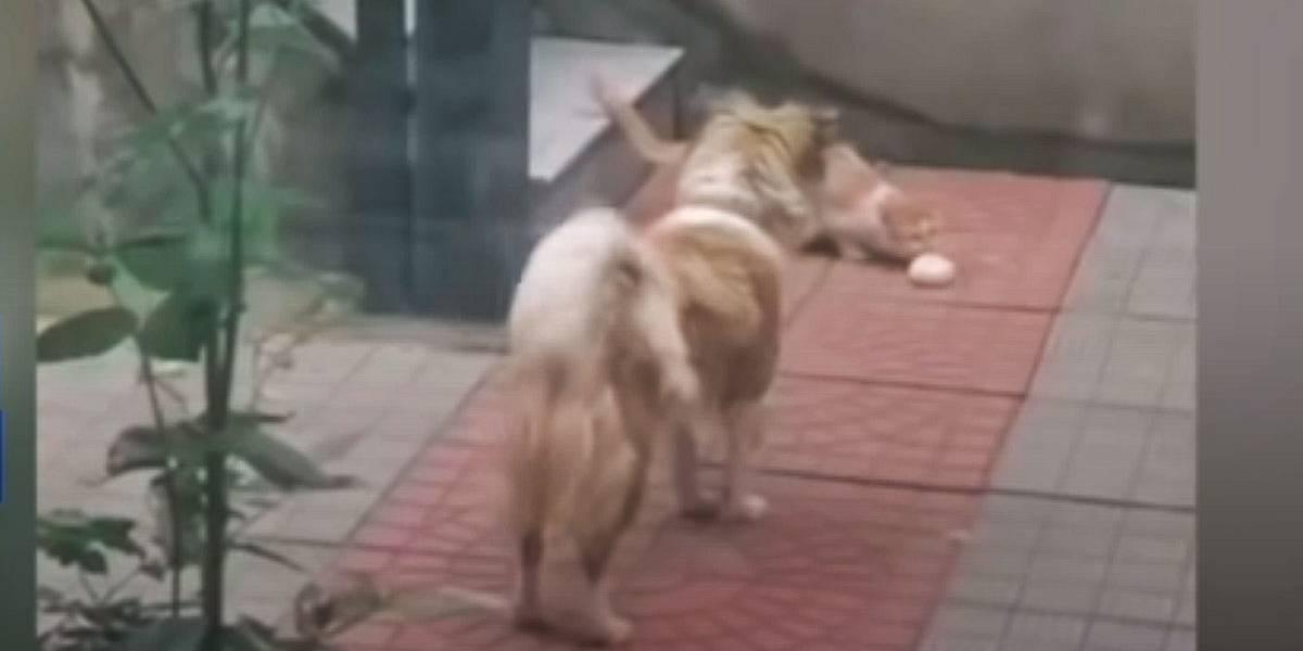 Vídeo mostra cachorro compartilhando comida com gato de rua