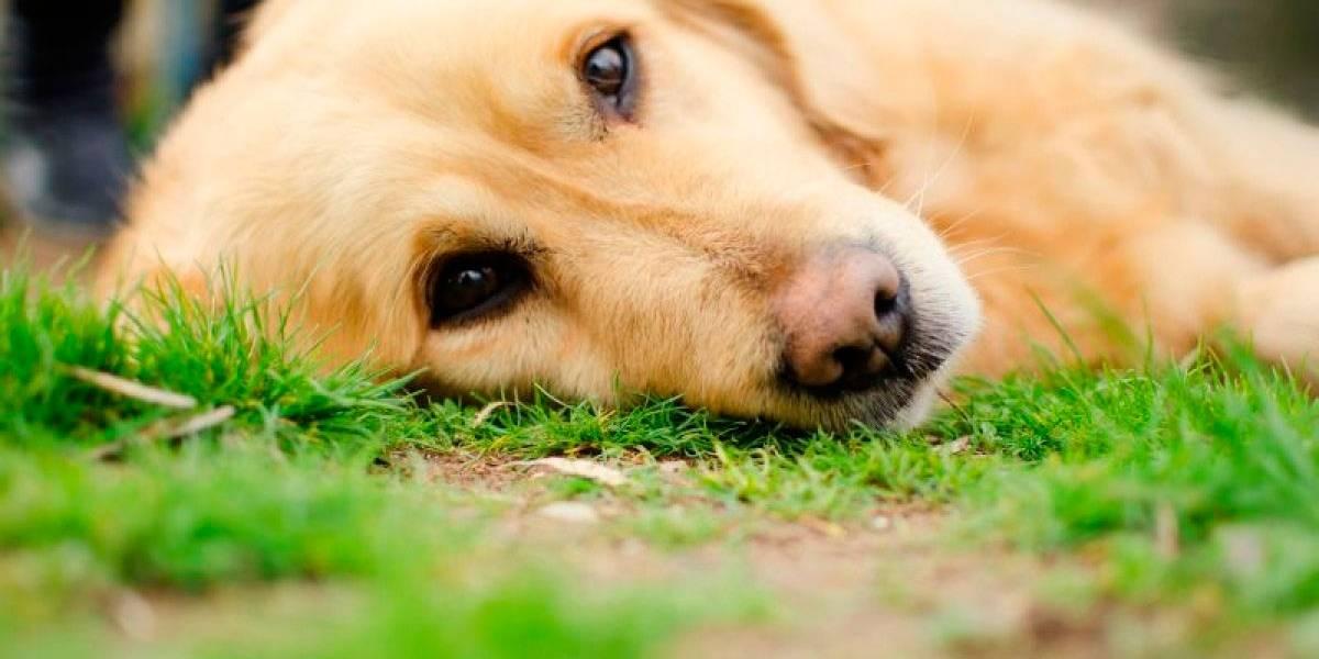 Seu cão está com diarreia? Saiba como evitar