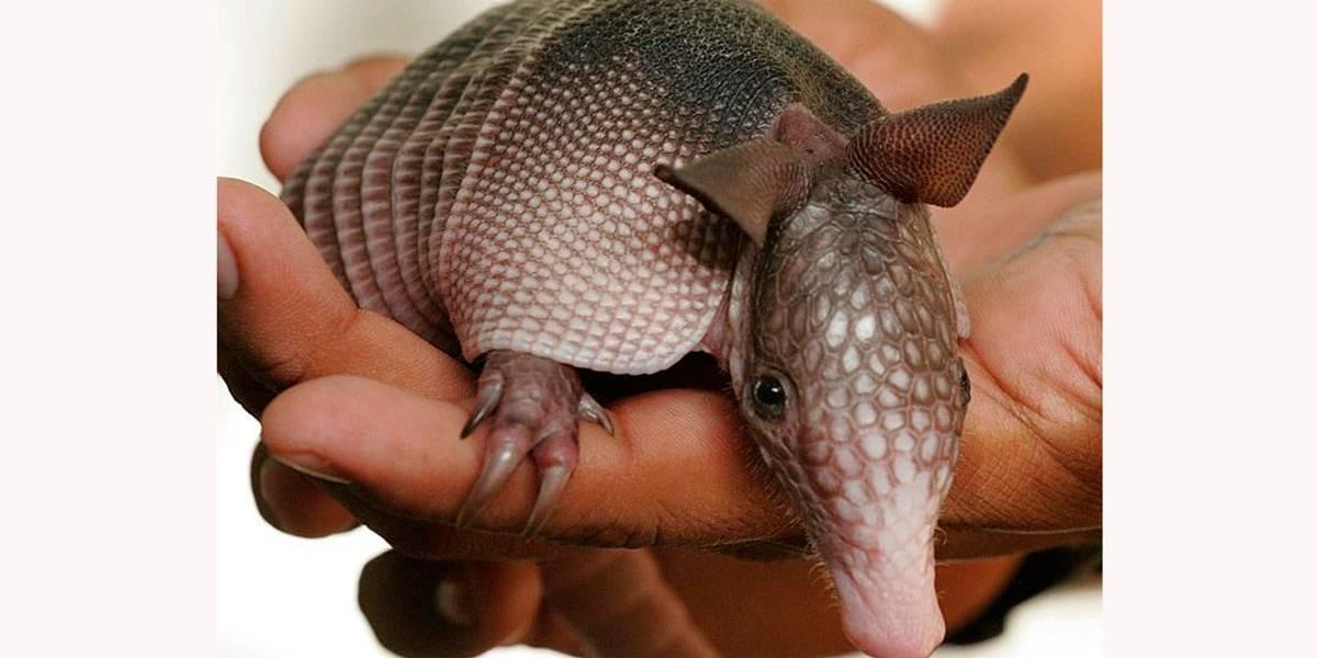 5 filhotes de animais que você nunca viu