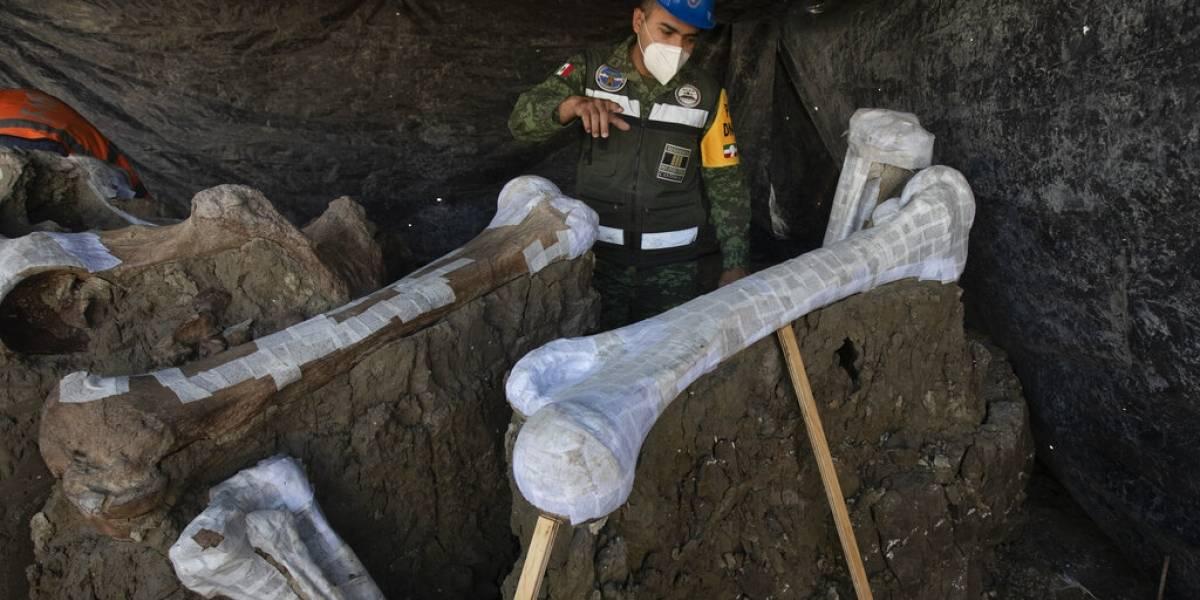 """Hallan lo que esperan sea una """"central de mamuts"""" a orillas de un lago ancestral"""