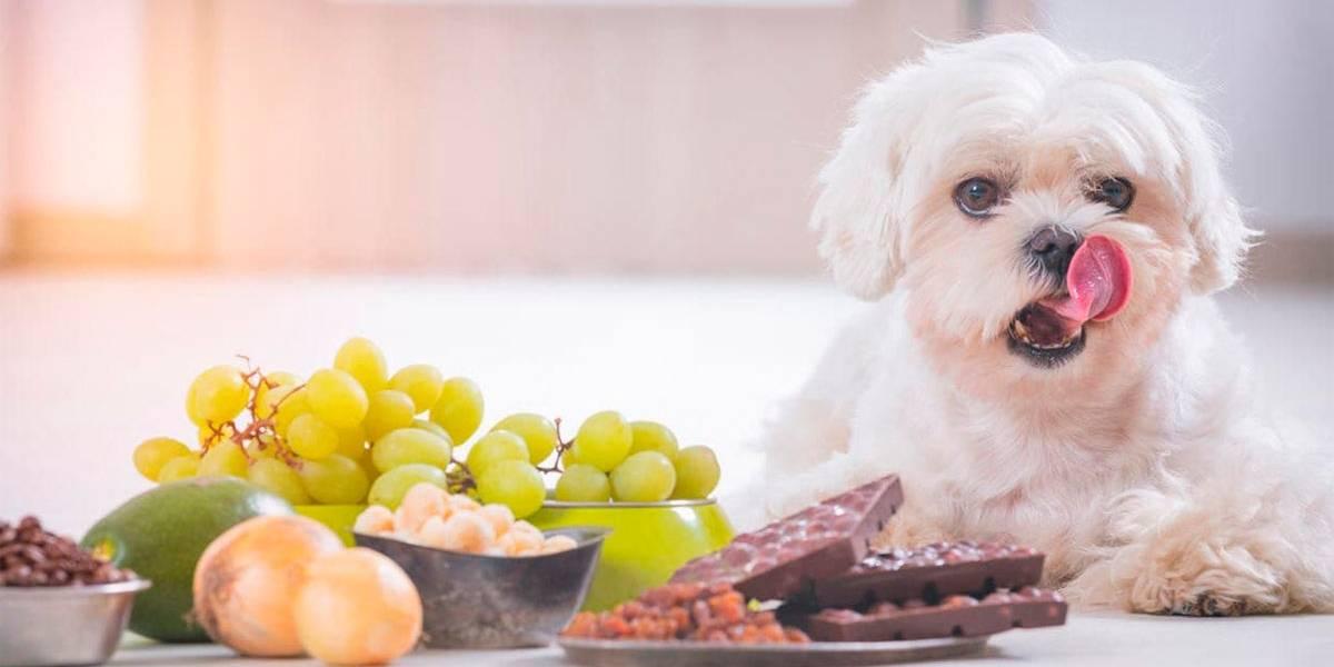 Cachorro pode comer UVA?