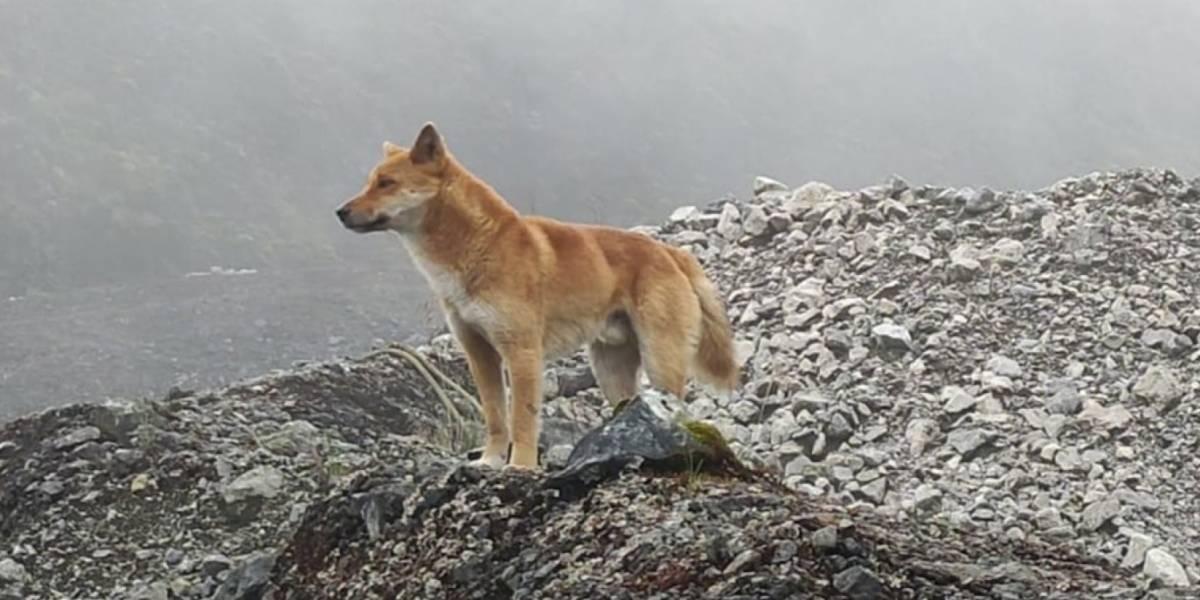 Hallan perros raros que se creían extintos