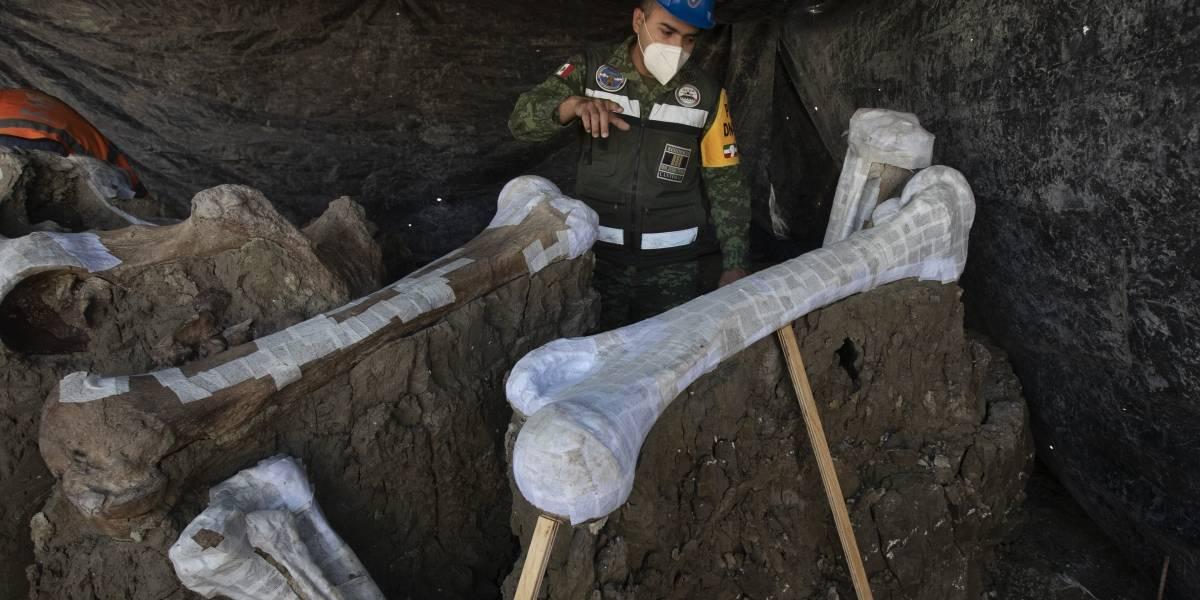 Encuentran más esqueletos de mamut donde construyen nuevo aeropuerto de México