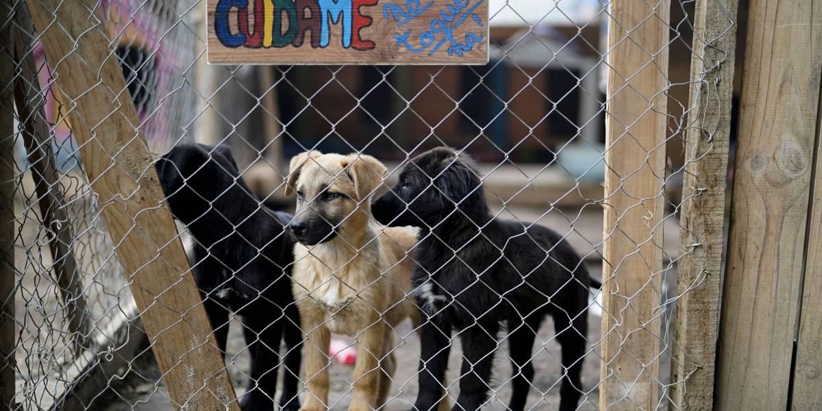 Nuevo caso de maltrato animal: ahorcaron a tres perritas en un árbol en Cabildo