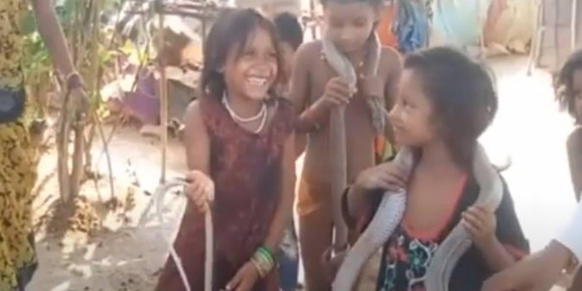 Vídeo mostra crianças brincando com cobras venenosas que foram dadas como presente de casamento