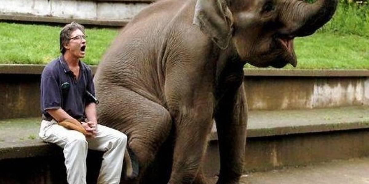 Las razones por las cuales un simple bostezo relaciona a los humanos con los elefantes