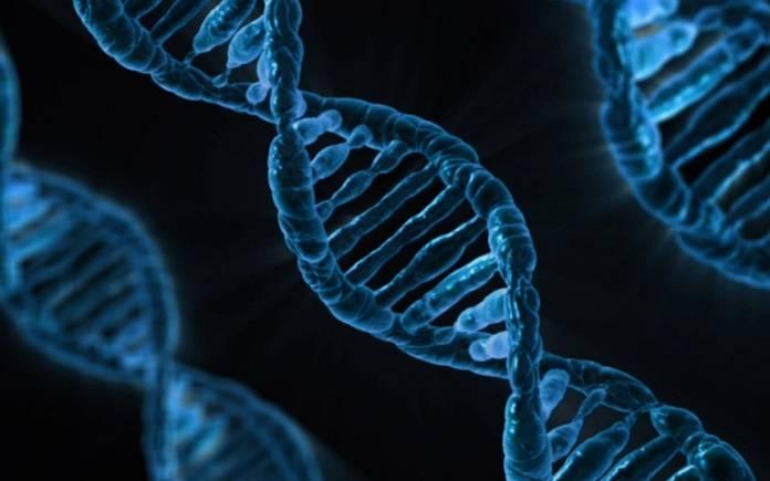 Genomas v