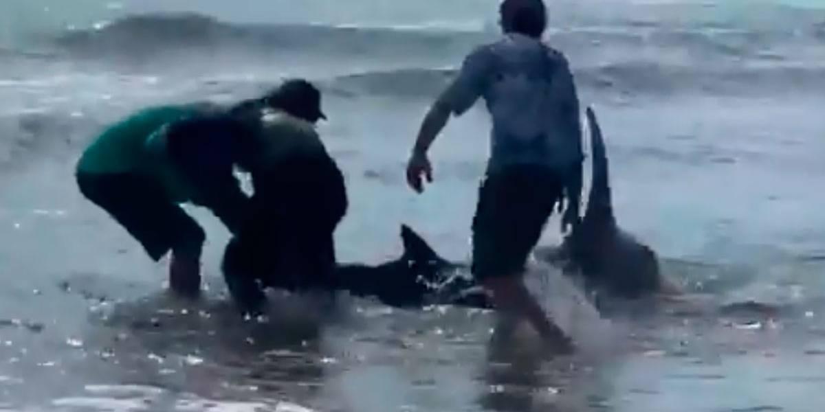 Vídeo mostra banhistas arrastando tubarão para o mar com as mãos