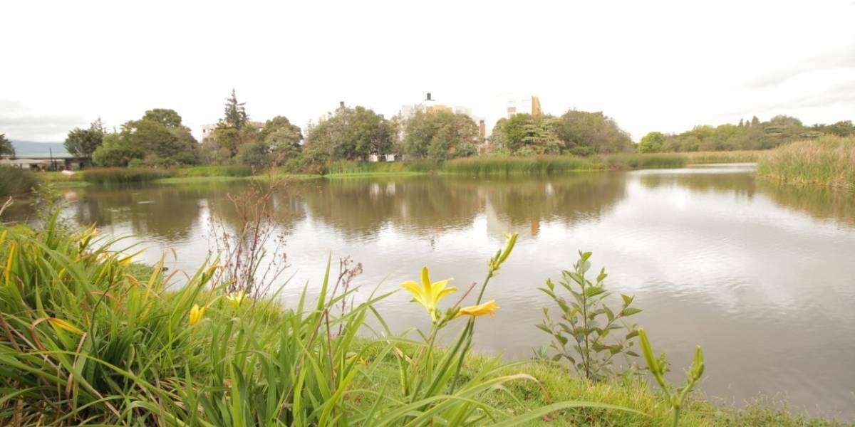 ¡A respirar aire puro! Habilitan ingreso a tres humedales de Bogotá para volver a tener contacto con la naturaleza