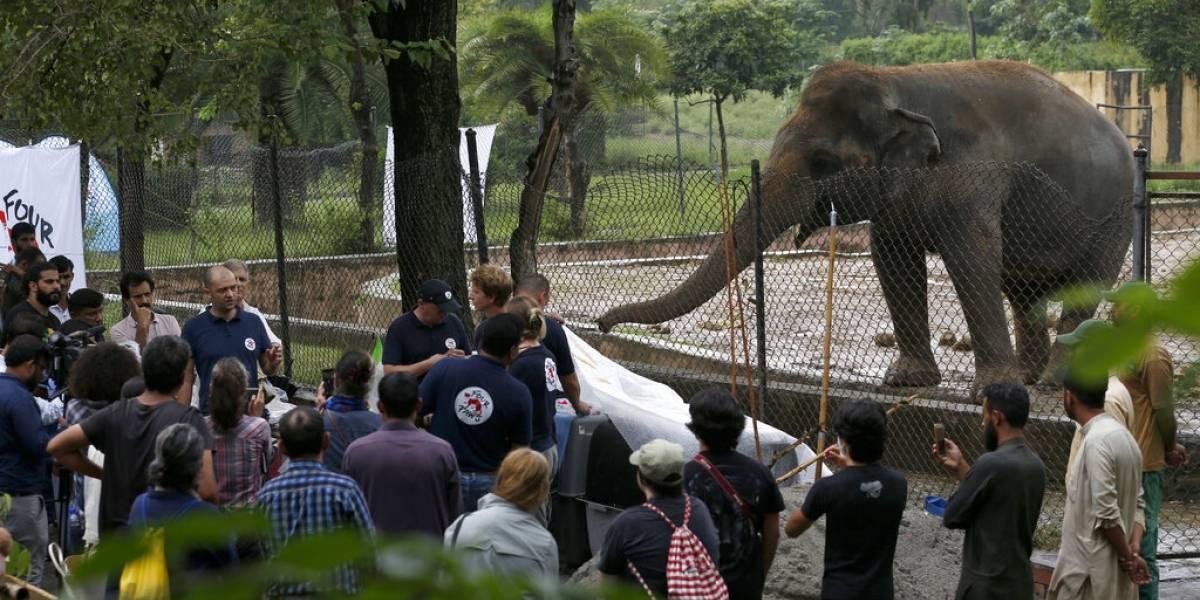 """Tras 35 años de sufrimiento: el """"elefante más triste del mundo"""" abandonará zoológico y será llevado a santuario de animales"""
