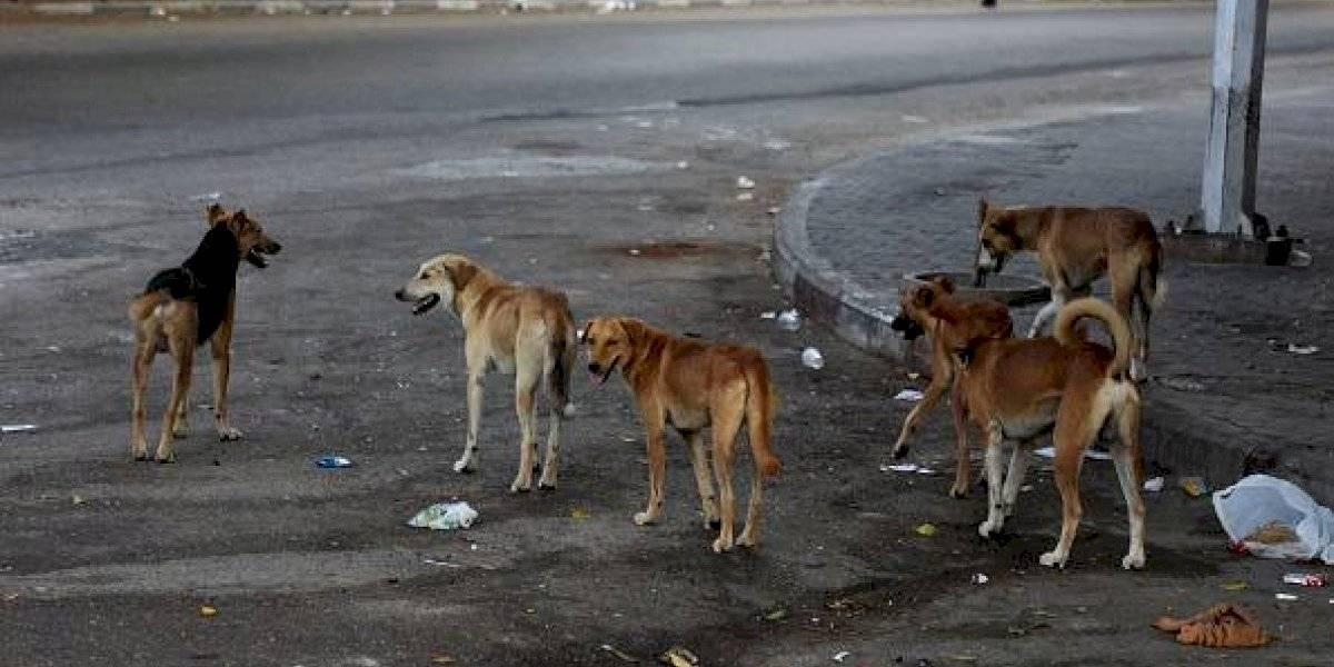 Video: agreden a una mujer por dar de comer a perros callejeros