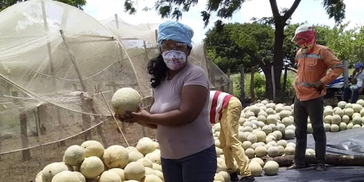 Sí nacimos pa' semilla: Las mujeres que sembrando dejaron atrás el conflicto armado