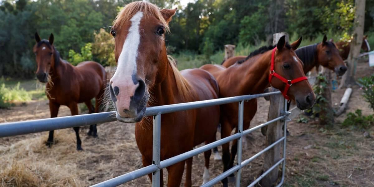 Investigan 153 macabros ataques a caballos en toda Francia
