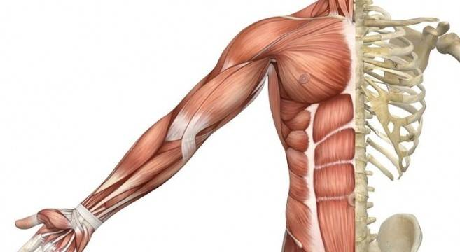 Músculo y Hueso