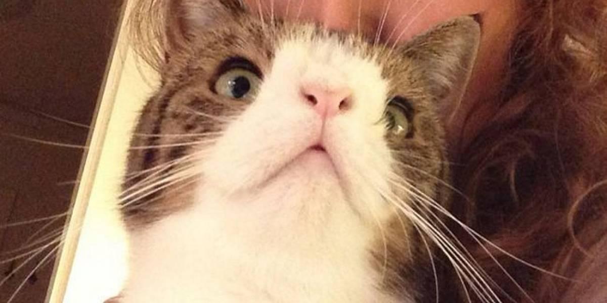 Que amor! Gatinho rejeitado por três anos devido deficiência física, é adotado e ganha novo lar