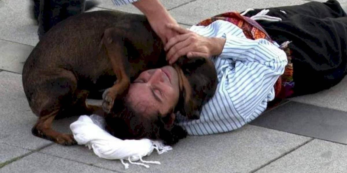Ternura al máximo: perro callejero interrumpe performance para ayudar a actor que creía herido