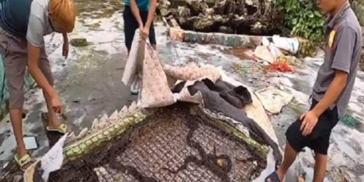 Vídeo surpreende ao mostrar dezenas de cobras venenosas sendo retiradas de colchão velho