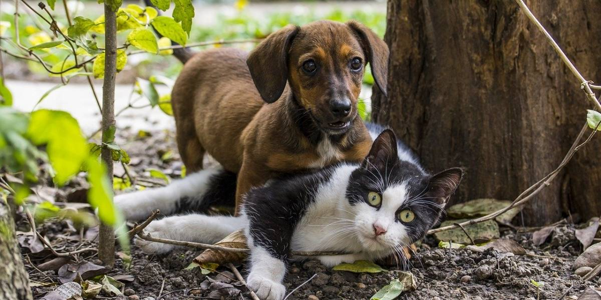 Maltratar cachorro e gato dará até 5 anos de cadeia