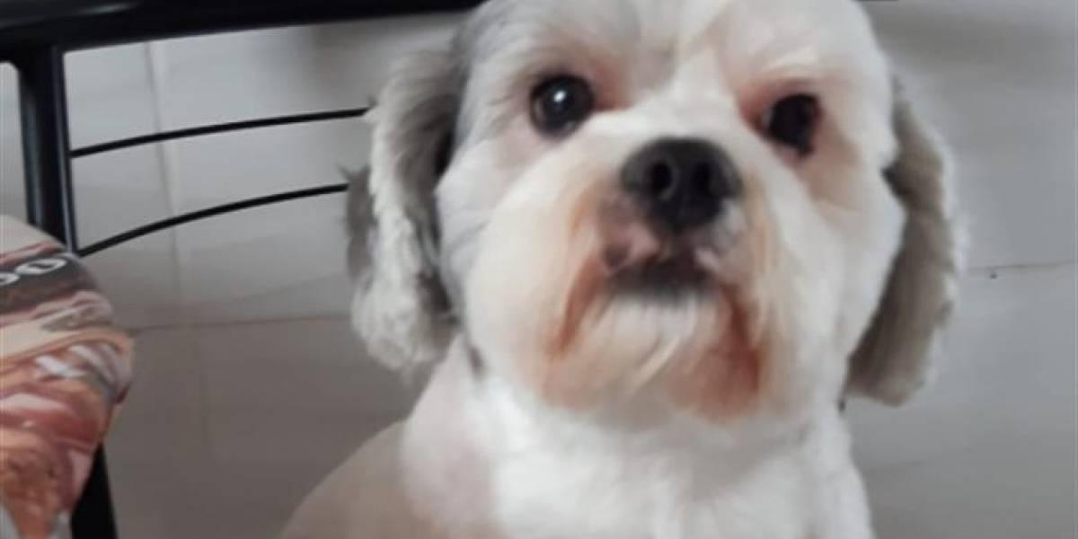 Negligência: Pet shop 'esquece' cachorro e dona entra em desespero