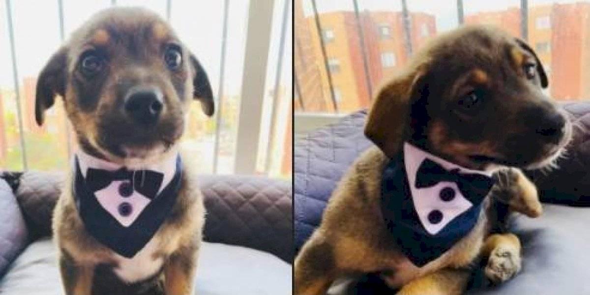 Perrito iba a ser adoptado y la persona nunca llegó: la historia se volvió viral y ahora está feliz junto a su nueva familia