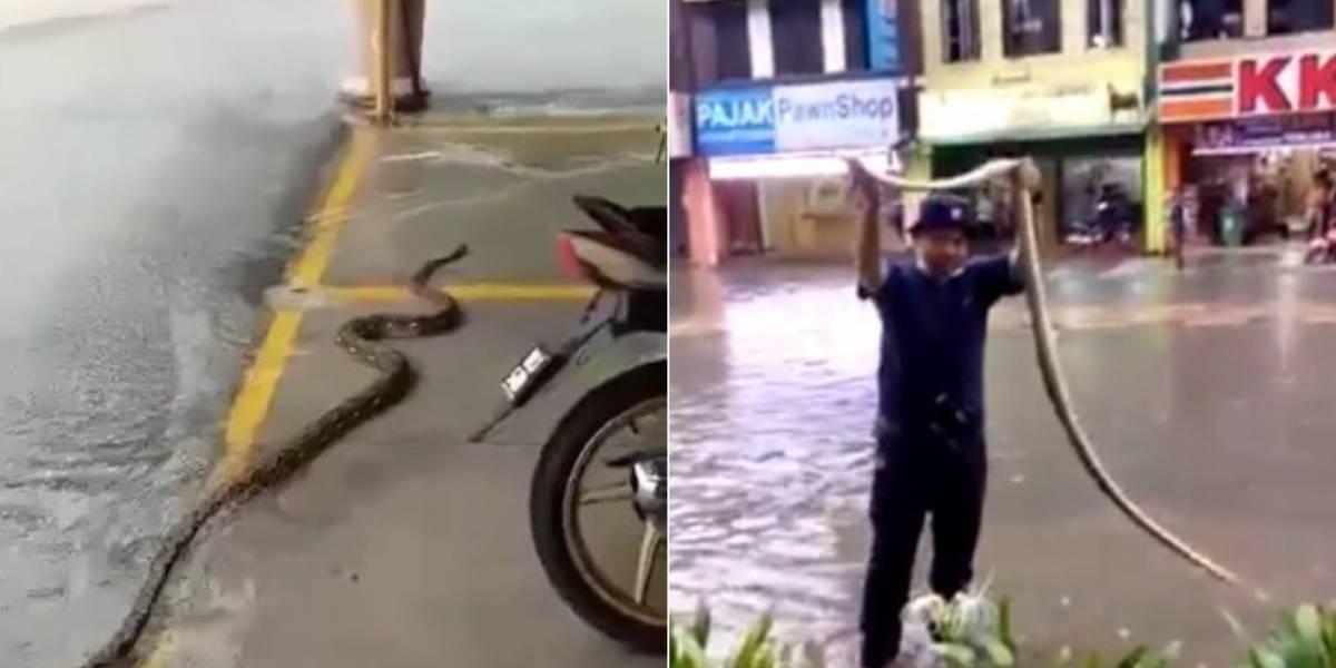 Vídeos mostram cobras nadando pela cidade após enchentes na Malásia