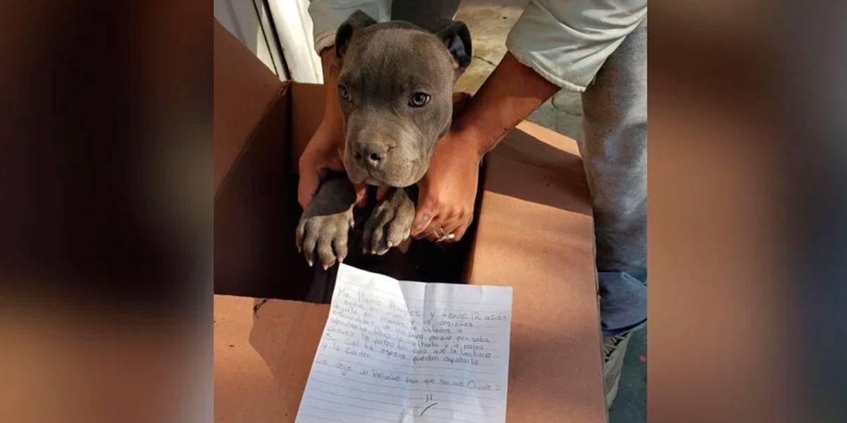 Garoto deixa filhote de cão em abrigo com carta sobre violência do pai