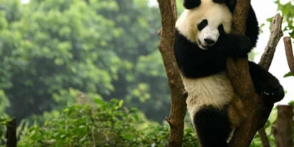 Estudio: Fondo Mundial para la Naturaleza advierte que la vida silvestre disminuyó en más de dos tercios en los últimos 50 años