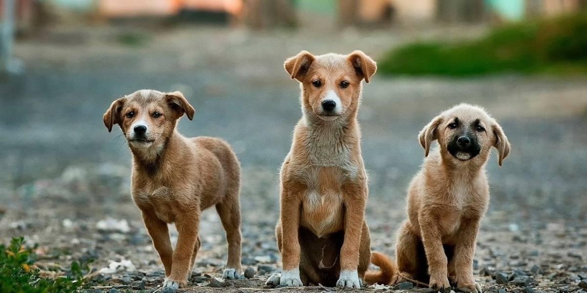 Santuario de Animales urge ayuda para atender a cachorros rescatados