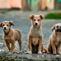 Consternadas organizaciones de animales tras golfista matar perro en Río Grande
