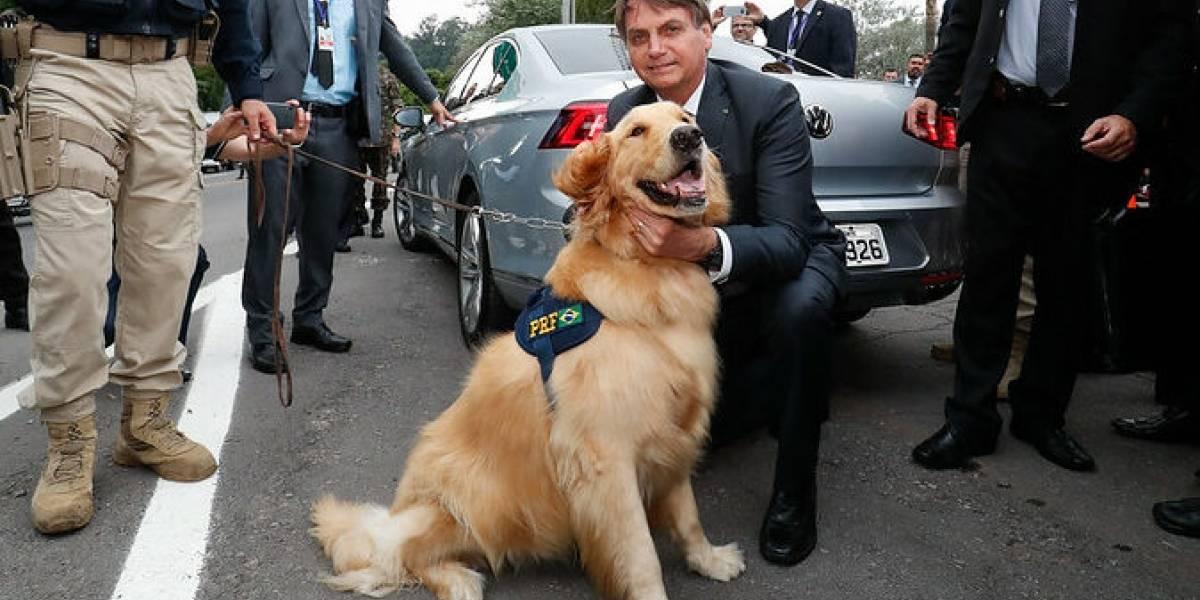 Bolsonaro fará enquete online sobre pena para maus-tratos aos animais