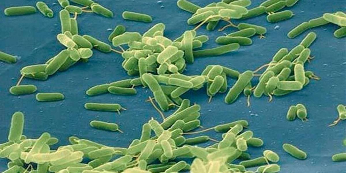 Bactéria carnívora é diagnosticada em 5 pessoas nos EUA