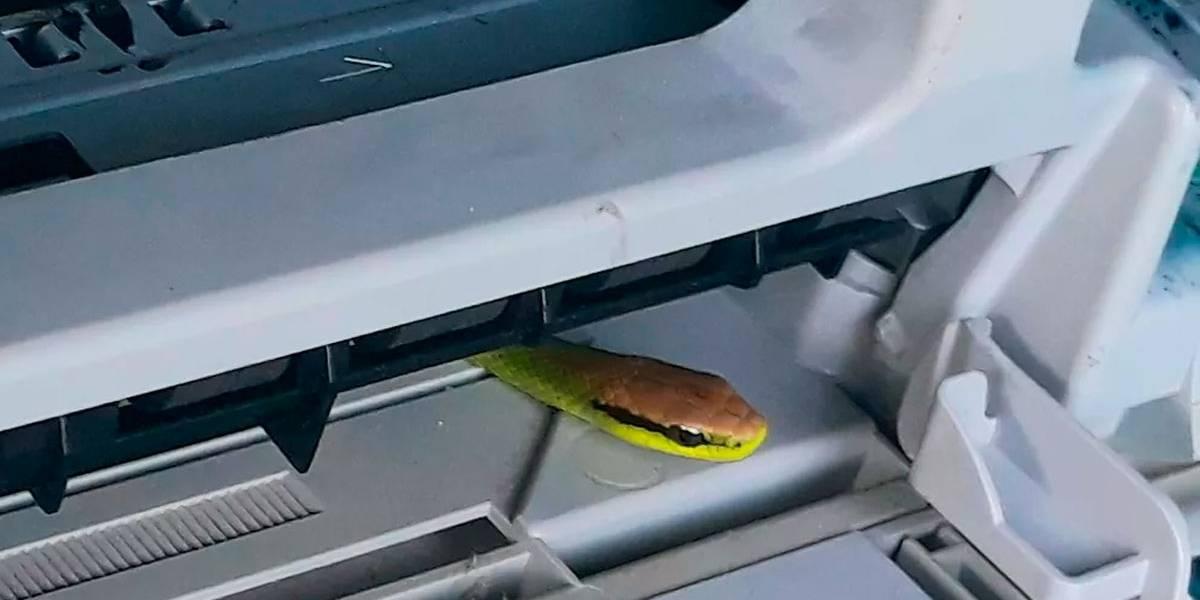 Cobra é achada dentro de impressora no RS