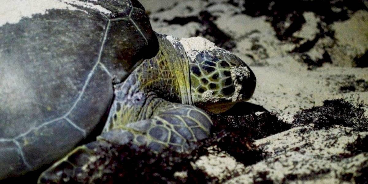 Ambientalistas piden detener pesca en Baja California Sur por muerte de tortugas