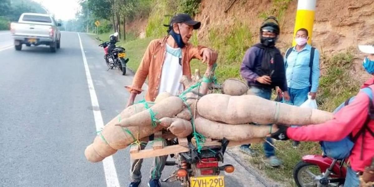 Fue registrada una Superyuca de 140 kilos que descrestó a sus cultivadores