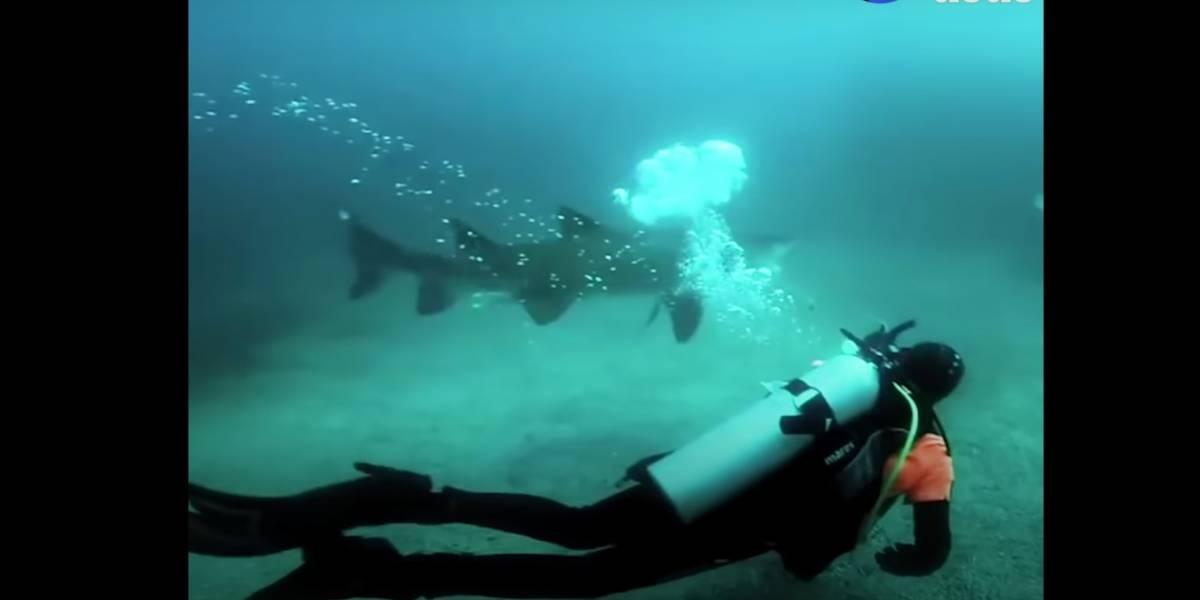 Vídeo impressionante mostra mergulhador removendo rede de pesca presa em tubarão