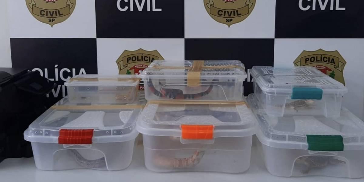 Estudante de veterinária é detido ao ser flagrado armazenando animais silvestres