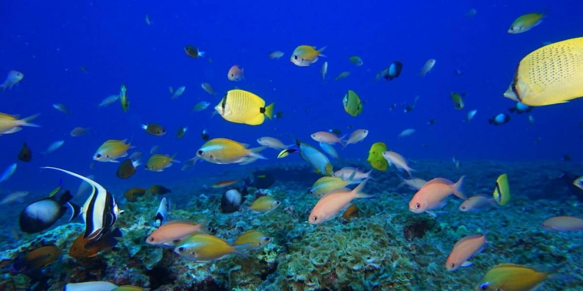 Fracasa intento de salvar la biodiversidad mundial