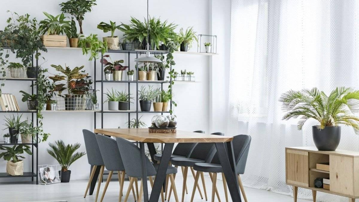 Las plantas en el hogar transmiten calma y paz