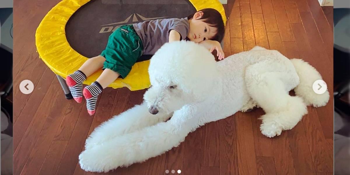 Vídeo de menino brincando com poodle gigante viraliza nas redes