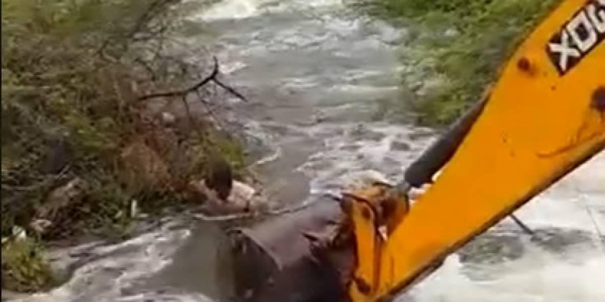 Vídeo: Homem arrisca própria vida para salvar cão em rio com forte correnteza
