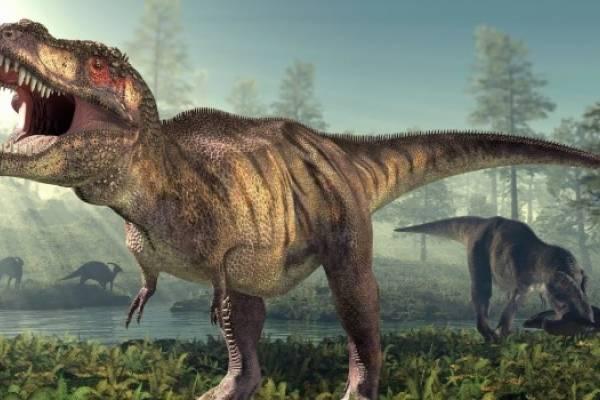 Cuantos Tipos De Dinosaurios Existieron Estas Son Las Distintas Especies Con estos dibujos de dinosaurios podrás imprimir y pintar grandes animales que ya se han extinguido como el branquiosaurio, el velociraptor, el tiranosaurio o el diplodocus. cuantos tipos de dinosaurios existieron