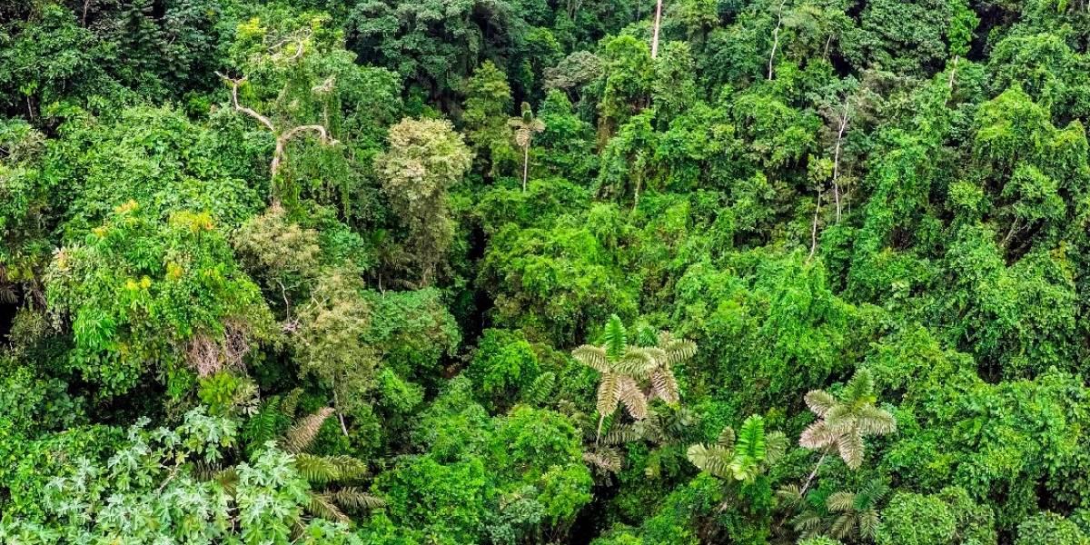 Ecuador recibe 18,5 millones de dólares para cuidar y proteger sus bosques