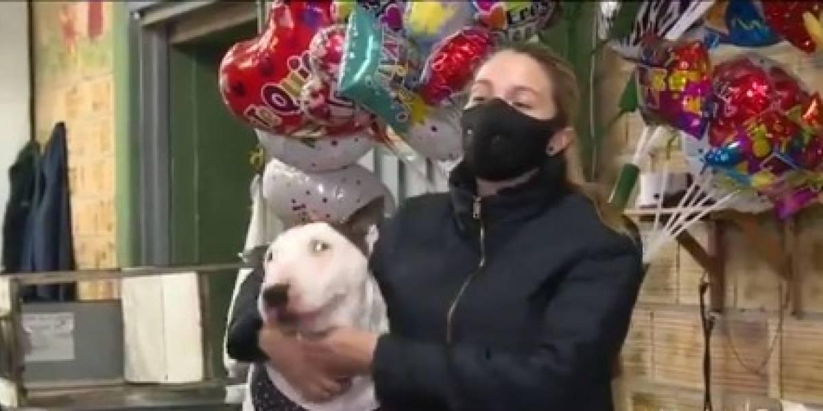 Perro valiente: salvó a 15 personas de tres atracadores armados en Bogotá