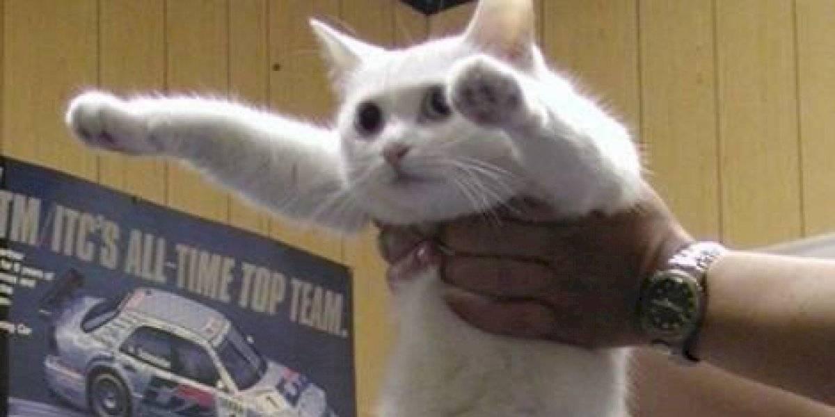 "Muere ""Longcat"": el famoso gato que era protagonista de varios memes en internet"