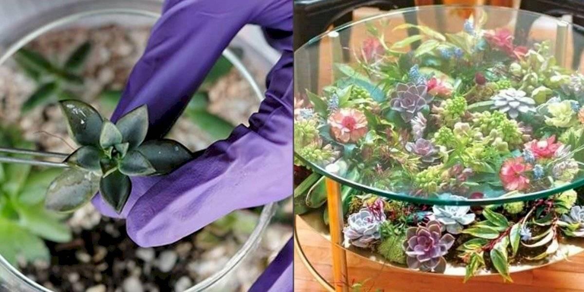 Dale un toque fresco y relajado a tu hogar creando un terrario con suculentas